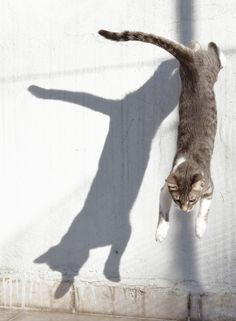 © Aris Matsoukas - La proie ou l'ombre