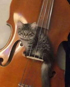 Oh my gosh....High diddle diddle, the cat and the fiddle. Love it.