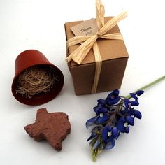 Texas Party Favors - Grow a Texas Bluebonnet Garden - State of Texas Themed Events Gifts by NatureFavors on Etsy https://www.etsy.com/listing/119996811/texas-party-favors-grow-a-texas