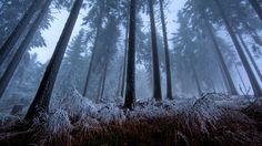 autumn forest night - Google Search