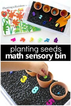 "For a preschool seed or gardening theme create a counting seeds gardening sensory bin. This sensory bin allows for hands-on exploration of planting seeds right into the ""soil"" all while working on number recognition counting and one-to-one correspondence."