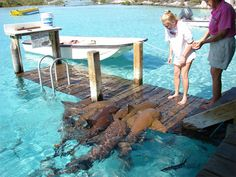 Compass Cay - Exumas, Bahamas. Nurse Sharks lay on the dock at high tide and you can feed them.