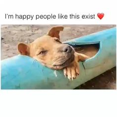 Compilation Of Human Helping The Animals ❤️ - Funny Adorable Animals The Animals, Cute Funny Animals, Cute Baby Animals, Cute Dogs, Human Kindness, Cute Stories, Tier Fotos, Faith In Humanity, Animal Memes