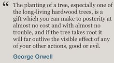 Today I am planting 200 trees in my garden to make a native hedge.  What a lovely quote from George Orwell. #aliceblogg