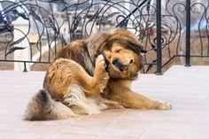 ***¿Cómo Cuidar la Piel del Perro?*** Conoce cómo cuidar la piel del perro desde su alimentación, además de otros cuidados simples para protegerlo y mimarlo diariamente....SIGUE LEYENDO EN..... http://comohacerpara.com/cuidar-la-piel-del-perro_11558h.html