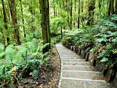 Going the path less travelled in Apollo Bay rainforest  #australiagram_mobile #nikontop #nikond3200 #explore #adventure #photography #offroad #victoria #apollobay #rainforest #green #nikonaustralia #nikon_landscapes #nikonofficials #nikononly #nikon_owners #photographerinthemaking #amatuerphotography #photographer #australia #instalike #instamood #likes4likes #follow4follow #ig_masterpiece by fightmynikon_photography http://ift.tt/1LQi8GE
