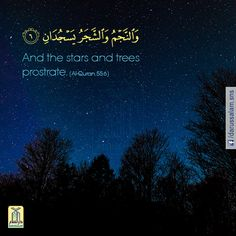 Qur'an Ar-Rahman 55:6: And the stars and the trees both prostrate.