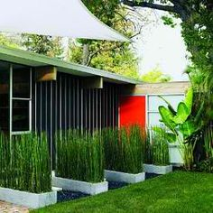 to the outdoors Street entrance with bold orange door and horsetail-filled concrete planters. photo:Thomas J. StoryStreet entrance with bold orange door and horsetail-filled concrete planters. photo:Thomas J. Modern Planting, Modern Landscaping, Landscaping Ideas, Backyard Ideas, Bamboo Planter, Concrete Planters, Long Planter, Landscape Architecture, Landscape Design