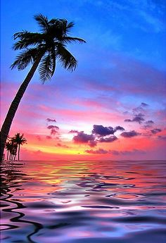 Sky meets the water...& palm trees <3