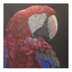 Green-winged Macaw on the black canvas