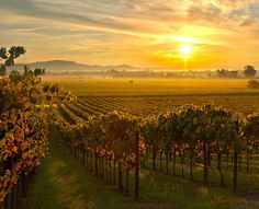 Love all Kistler wines