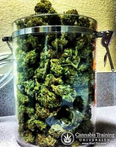 Medical Marijuana buds in a industrial jar | theCTU.com
