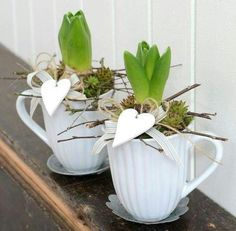 The spring in the cup. In it is a hyacinth .- Der Frühling in der Tasse. Darin befindet sich eine Hyazinthe, Sukkulenten und … The spring in the cup. Inside is a hyacinth, succulents and a heart completes the whole thing. Deco Nature, Spring Bulbs, Deco Floral, Container Flowers, Easter Table, Decoration Table, Spring Crafts, Easter Crafts, Spring Flowers