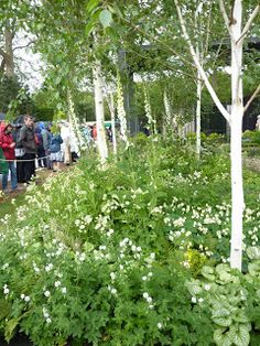 A SMALL GARDEN COMES TO LIFE - silver birch garden