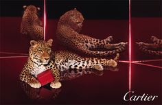 cartier advertising images - Google Search