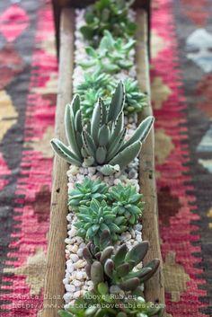 Far Above Rubies: Succulent Planter Box