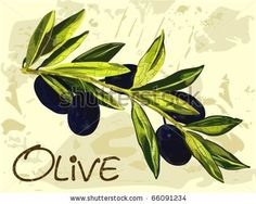 cute olive illustration - stock vector