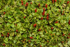 Fields of berries • • • • • #grass #berries #field #berry #tree #trees #red #garden #plants #raspberry #fruit #mothernature #plant #photograph #composition #color #instaart #camera