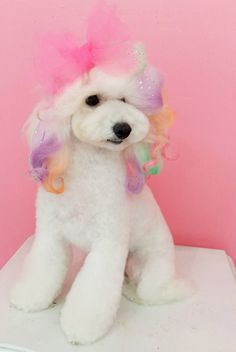 Yes i am a little angel and i yes i would do this fur wonder dog repinned more beautiful creative dog grooming solutioingenieria Image collections