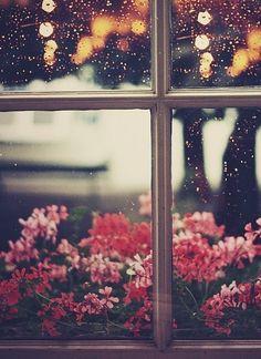 Flowers. Window