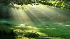 a redenção do Senhor Deus - Pesquisa Google Niagara Falls, Waterfall, Outdoor, Travel, Finding Nemo, Lord, Nature, Dios, Lugares