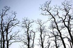 Google rezultati pretraživanja slika za http://www.bordalierinstitute.com/images/Tree_Branches_At_Dusk.jpg