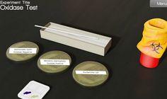 Teste seu conhecimento e sua prática no Laboratório Virtual Interativo de Bacteriologia