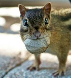 what nut?