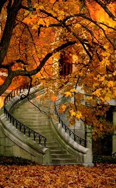 Stairway in Autumn.. Vanderbilt University, Nashville, Tennessee