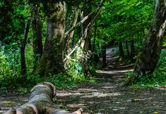 There's a small forest near my house that I've always loved. It has a stream, plenty of trees and is full of little animals. Forest Trail, Back Gardens, The Great Outdoors, My House, Nature Photography, Waterfall, Trees, Flowers, Plants