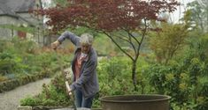Wicklow gardener and nursery owner June Blake planting up a vintage cast-iron pot with a selection of choice summer-flowering perennials