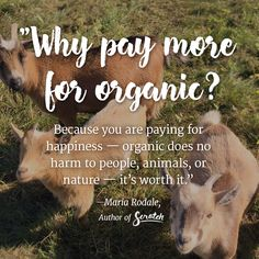 What pay more for organic? Because you are paying for happiness - organic does no harm to people, animals, or nature - it's worth it. For easy, homestyle recipes anyone can make, get a copy of #ScratchCookbook by @mariarodale at www.scratchcookbook.com!