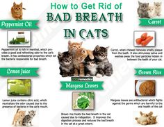 When remain untreated for long time bad breath in cats can lead to the serious dental problem. Thus, it is important to treat the disorder in the early stages. Here are some natural home remedies which reduce bad breath in cats.