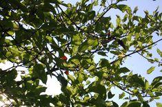 -Madison Poll 8/31/18 Fruit, Photography, Photograph, Fotografie, Photoshoot, Fotografia