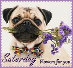 Saturday Flowers For You  saturday saturday quotes happy saturday