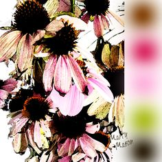 ConeFlower:  ColorBoard No. 11