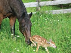 Unlikely mothers: Adoption in the animal world