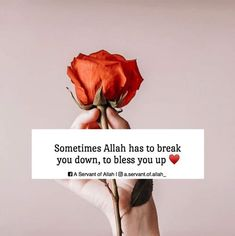 Ali Quotes, Peace Quotes, Spiritual Quotes, Words Quotes, Positive Quotes, Sayings, Islamic Quotes Wallpaper, Islamic Love Quotes, Islamic Inspirational Quotes