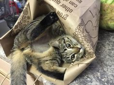 14 Times People Thought Their Cat Was Malfunctioning | CutesyPooh