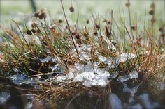 snow on the winter grass....such a pretty morning - melting and flowing into the earth