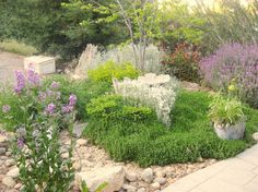 Gardening in the Sierra foothills with herb/spice plants