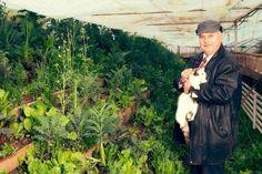 Cele mai bune îngrășăminte nu costă o avere. Ele pot fi obținute din plante recunoscute pentru că pot oferi culturii de legume nutrienții de care aceasta are nevoie, explică Marin Dumbravă, Balcony Plants, Fertility, Mai, Organic, Gardening, Cottages, Healthy Food, Plant, Balcony Planters