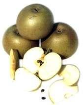 insalata di mele e sedano