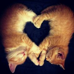 kalp kedi