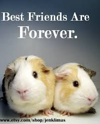 BFF for realz!