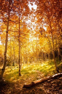 Pathway in early autumn (Alpine Loop, Utah) by Laura Bellamy