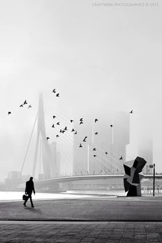 The Rotterdam and Erasmusbrug | Rotterdam | Netherlands | Guided Tours | The Original Rotterdam Way! | #NaaiAntwerp https://www.RotterdamAdventures.nl