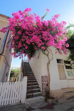 Paxos Island, Ionian Sea, Greece Bougainvillea, Small Courtyard Gardens, Outdoor Gardens, Arte Orca, Paxos Island, Beautiful Flowers, Beautiful Places, Home Vegetable Garden, Photos Voyages