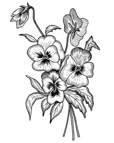 There is another craze is to draw patterns, flowers, mandala patterns in ink. Then you can even color them using color pencils. Pansy Tattoo, Violet Tattoo, Flower Tattoos, Peonies Tattoo, Flower Coloring Pages, Coloring Book Pages, Plant Drawing, Decoupage Vintage, Digi Stamps