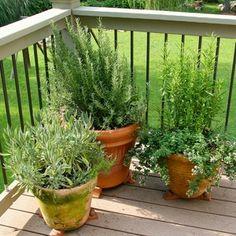 How to Best Grow an Herb Garden in Pots | The Gardening Experts